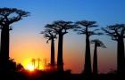 Le piante si estinguono 350 volte più velocemente che in passato: la scienza lo conferma