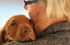 Voilà pourquoi les chiens sont des créatures si spéciales : le monde entier les célèbre lors d'une journée qui leur est dédiée