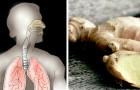 O gengibre, potente aliado natural contra a tosse seca ou com catarro