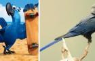 Abschied vom Spix-Ara: Der blaue Papagei, der den Film