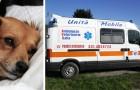 Anche in Lombardia arriva l'ambulanza veterinaria, il pronto intervento per gli animali in difficoltà