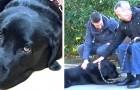 Die Geschichte von Lass, der Labradorin, die gelernt hat, ihr an Alzheimer erkranktes Herrchen nach Hause zu bringen