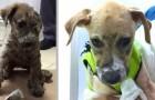 Dit hondje werd geslagen en ondergedompeld in lijm, maar zijn verhaal had een gelukkig einde