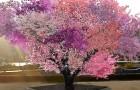 L'arbre de Frankenstein : l'incroyable plante qui produit 40 sortes de fruits différents