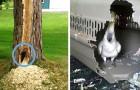 20 immagini esilaranti dimostrano che gli uccelli sanno essere molto dispettosi (e anche distruttivi)