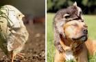 Deze lieve dieren zullen je donkerste dag verlichten met een glimlach
