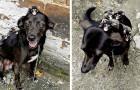 """Dit hondje besluit de kleine buidelratjes te """"adopteren"""" om te laten zien wat het betekent om moeder te zijn"""
