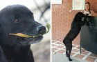 Cada día este perro compra un bizcocho en el bar y paga con una hoja