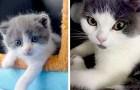Die erste geklonte Katze in der Geschichte der Wissenschaft heißt Garlic und wird in China