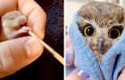 Diese neugeborenen Tiere sind so klein, dass sie in eine Handfläche passen würden