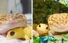 Questo geco non smette di sorridere quando si trova in compagnia del suo geco giocattolo