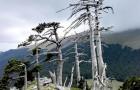 De oudste boom in Europa bevindt zich in Italië: dit zijn alle geheimen van Italus