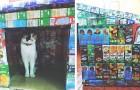 Esta joven crea casitas impermeables para animales callejeros de viejas confecciones de jugos de fruta