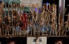 La strage silenziosa dei cavallucci marini: utilizzati come snack e souvenir, ora rischiano l'estinzione
