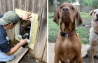 Two neighbors make a door in their fence to let their inseparable dogs play together