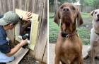 Twee buren hebben een deurtje in de schutting gemaakt om hun onafscheidelijke honden te laten spelen