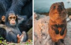 Die Finalistenfotos dieses Wettbewerbs zeigen die komischste Seite der Tierwelt