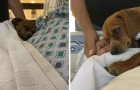 This sweet little dog refuses to leave his terminally-ill owner alone in the hospital