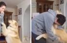 Dieses autistische Kind wird von seinem Hund während eines Angstanfalls beruhigt