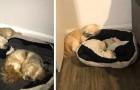 Efter det att hans bästa vän försvunnit, fortsätter den här hunden att lämna plats till honom på sin kudde