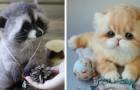 Deze vrouw maakt dieren van gekaard wol die tot leven lijken te komen
