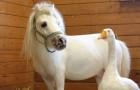 Un mini cavallo e un'oca sono disponibili per l'adozione, ma solo in coppia: la storia di un'amicizia molto particolare