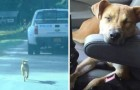 A dog chases a police car and is