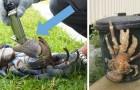 Een onderzoeker heeft voor het eerst de dodelijke beet van de kokoskrab gemeten