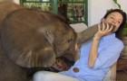 La petite éléphante orpheline était en danger de mort, mais cette femme l'a sauvée à temps : maintenant elles sont inséparables