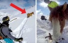 He finds a horse stuck in the snow for 4 days and manages to rescue it!