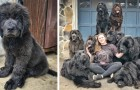Cette femme vit à avec 9 chiens terre-neuve dressés pour aider les enfants avec des difficultés de communication