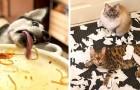 18 hilarische foto's die laten zien waarom we onze huisdieren nooit uit het oog mogen verliezen