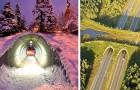 12 spezielle Brücken, die das Leben vieler Tiere und Autofahrer retten