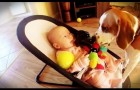 This puppy steals the baby's toy, but then feels guilty !
