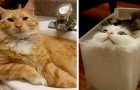 21 fun reasons why cats will one day conquer the world