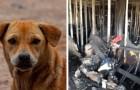 Graças ao gesto heroico do cachorro, esta família conseguiu escapar de um incêndio em casa
