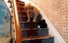Si un chat bloque le passage, seule la manière forte peut leur faire changer d'avis!