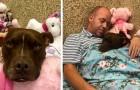 Cet homme a dormi dans le refuge avec la chienne que personne ne voulait, réussissant ainsi à la faire adopter