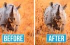 Foto's van bedreigde dieren: het aantal pixels komt overeen met het aantal resterende exemplaren