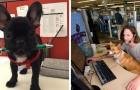 Portare animali domestici in ufficio potrebbe ridurre lo stress e aumentare la produttività: uno studio lo conferma
