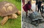 Die Alagba-Schildkröte ist weg: Sie war 344 Jahre alt und das älteste Landtier des Planeten