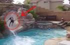L'incredibile comportamento del doberman che gioca sullo scivolo d'acqua