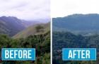 Un gruppo di giovani ha piantato oltre 2 milioni di alberi in Brasile