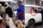 A taxi driver accepts 8 stray dogs as passengers together with an elderly woman