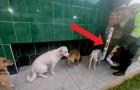 Uma delegacia de polícia no Peru instalou na rua duas tigelas com comida para os cães de rua