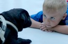 Viver com um animal doméstico melhora a vida das crianças: um estudo confirma