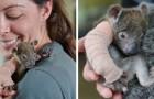 Questa piccola koala orfana è stata salvata dopo essersi rotta un braccio cadendo da un albero