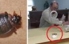 O escritório municipal se recusa a ajudá-lo na desinfestação: ele se vinga liberando os insetos sobre a mesa do funcionário