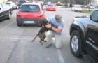 Regresa de la mision y su perro lo recibe perdiendo completamente el control