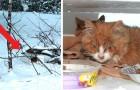 Un homme voit une boîte dans la neige et trouve deux chatons abandonnés à eux-mêmes presque gelés